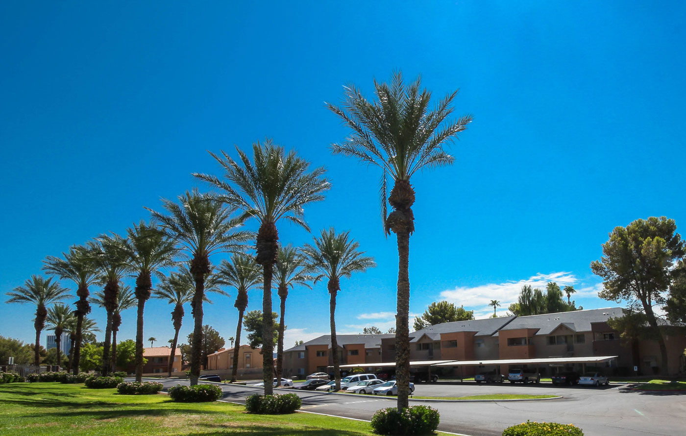 Silver Stream Apartments Parking Lot View with Palm Trees.